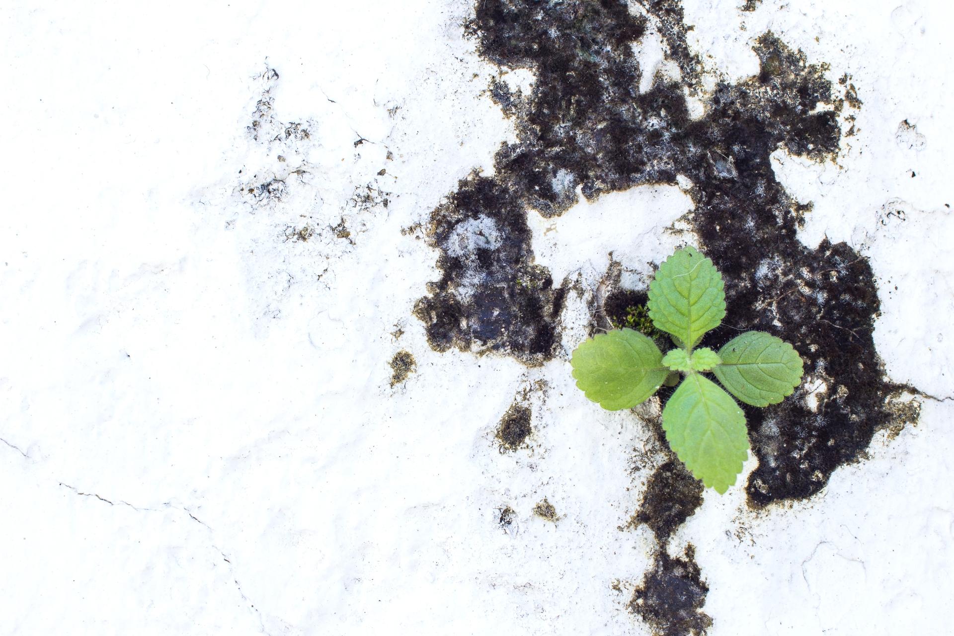 11 danske restauranter hyldes af Michelin for bæredygtighedsarbejde